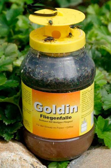 Goldin Fliegenfalle
