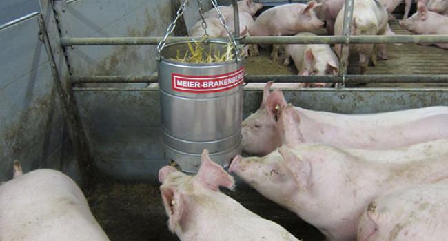 Porky's Fun Strohbox
