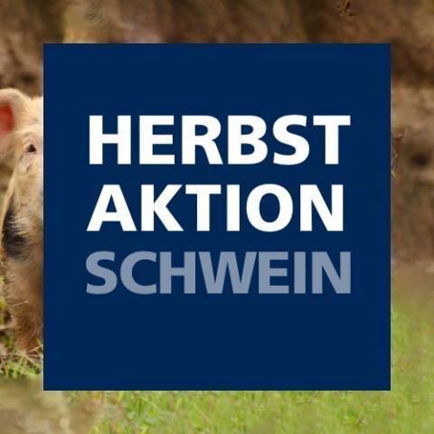 Herbstaktion Schwein 2021