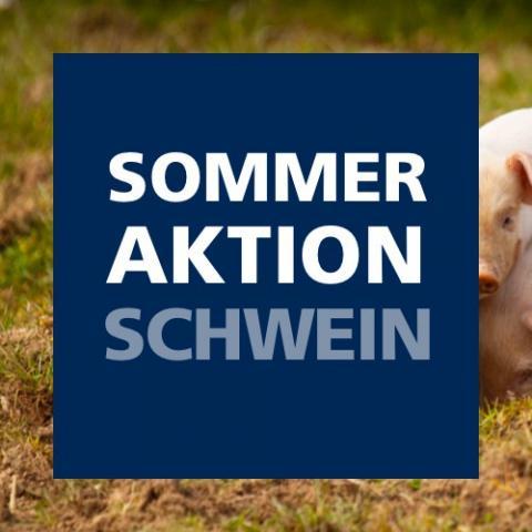 Sommeraktion Schwein 2021