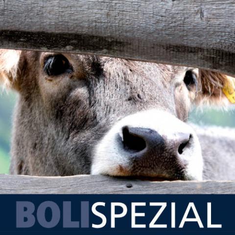 Boli Spezial