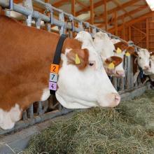 Herdenmanagement mit System