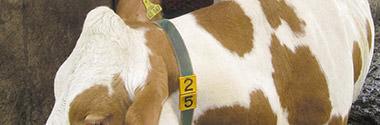 Tierkennzeichnung und –bändigung