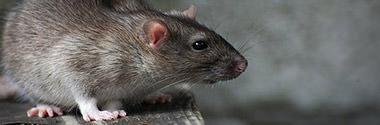 Ratten- & Mäusegift