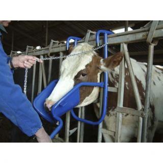 Kopfstütze für Rinder #2